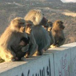 """آخر سفير للقذافي بالمملكة يكشف """" كيف عرف القتلة مكانه """""""