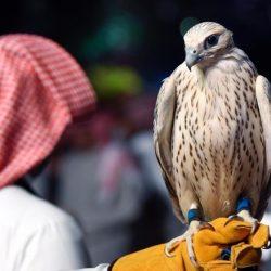 """""""11 تحدياً تهدد الطيور محلياً ودولياً"""" محاضرة في معرض الصقور والصيد السعودي"""