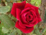 """الشاعرة السلطانة وقصيدة بعنوان """" الحب ما هو من اختيارك"""""""