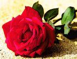 الشاعرة نوف الوحيمر (نسايم ليل) وخاطرة في حب الوطن