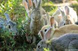 بولندا لمواطنيها: تكاثروا ″مثل الأرانب″