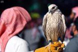 """""""الحر"""" أسرع الصقور وأقواها وأجملها شكلا.. والمفضل لدى هواة الصيد في السعودية"""