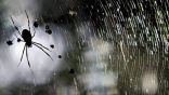 وفاة العنكبوت الأكبر سنا في العالم عن 43 عاما
