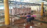 تهيئة مسالخ الطائف لاستقبال 3 آلاف رأس من الماشية يومياً