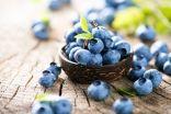 فوائد عديدة يحويها كوب من التوت الأزرق يومياً..