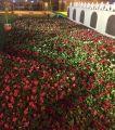 سجادة زهور وفلكلور شعبي في بيت الطائف بالجنادرية