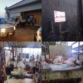 مستغلاً إجازة البلدية.. شاهد مسلخ أهلي يذبح إبلاً وأغناماً مريضة ويبيعها على أنها أبقار في القنفذة