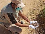 """""""البيئة"""" ترصد تكاثراً للجراد في جدة وعدد من مدن الساحل الغربي.. وتواصل جهود المكافحة"""