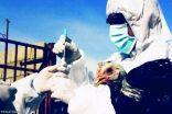 """"""" البيئة"""" : تسجيل إصابتين جديدتين بإنفلونزا الطيور H5N8 خلال الـ 24 ساعة الماضية"""