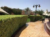 تهيئة 182 متنزها وحديقة عامة للموسم السياحي بالطائف