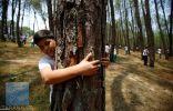 بالصور.. في نيبال.. لماذا يحتضن الناس الأشجار؟
