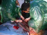 عملية قيصرية ناجحة لإنقاذ ناقة تعسرت ولادتها في مهرجان الملك عبد العزيز للإبل