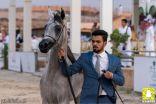 بحضور الدكتور تركي بن الأحمد السديري إختتام فعالية إنتاجية جمال الخيل العربية الأصيلة الثامنة بمحافظة الطائف