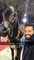 الخيل العربي اليخاندرو بطل العالم  في باريس أمس