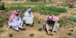 متقاعد في الباحة … ينجح في زراعة الزعفران .. تعرف على قصته؟