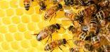 هل تساعد لسعات النحل في علاج التهاب المفاصل؟