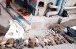 امرأتان تقتلان 16 كلباً ضرباً بالعصي في الهند