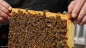 النحل والكسل لا يجتمعان.. العلم يكشف سر النشاط