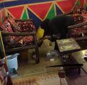 إدارة مهرجان أبها للتسوق توضح حقيقة تشغيل فتيات سعوديات عاملات نظافة