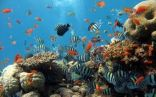 باحث فرنسي يحذر من انقراض أنواع من الأسماك خلال القرن الحالي