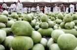 """""""الوادي"""" يصدّر 84 ألف طن من الحبحب للسوق المحلية والخليجية"""